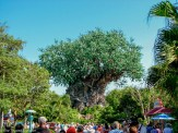 Disney's Animal Kingdom - Guide to the Orlando Theme Parks - The Trusted Traveller