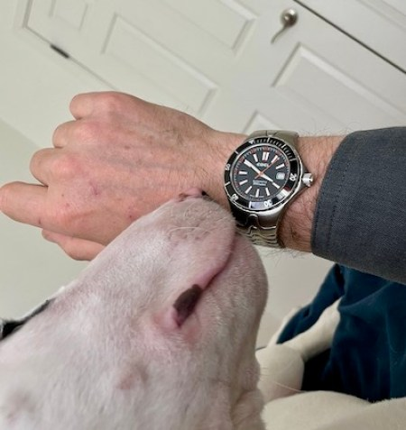 Dog and watch 2