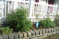 Bm_garden