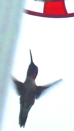Hbird2
