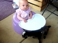 Goat_baby_2