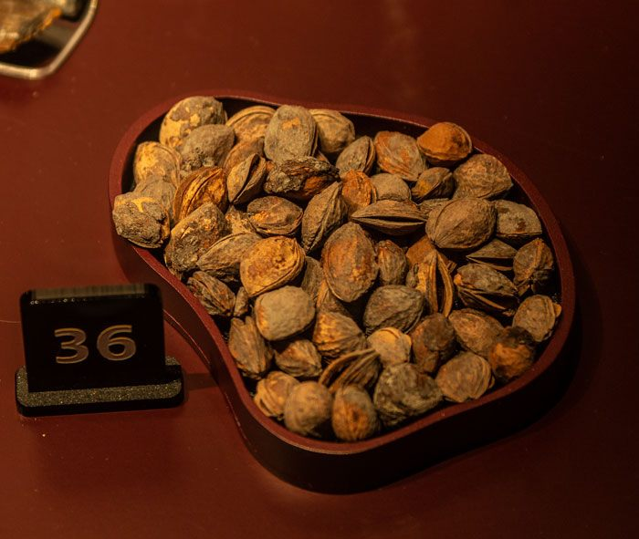 A bowl of plum stones found on the Mary Rose