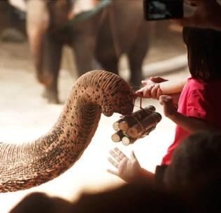 Maetaman Elephant Camp, Chiang Mai