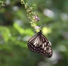 The Butterfly Garden, Zamboanga
