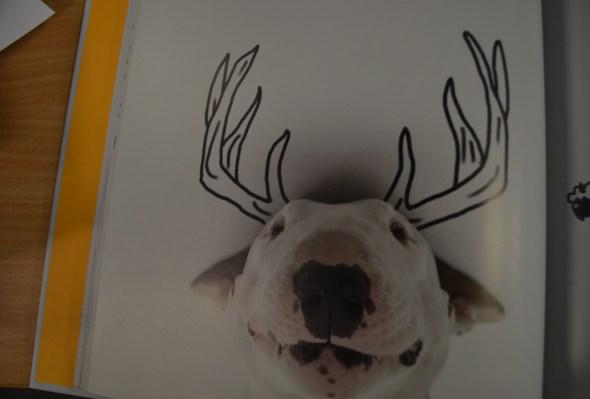 A Dog Named Jimmy Rafael Mantesso