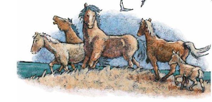 Horses canada