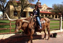 Sitting on a steer in Forth Worth