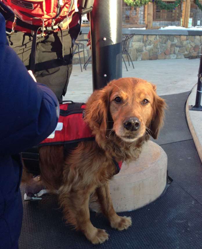 Meet the avy dogs at Keystone!