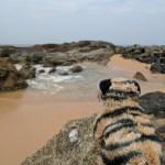 Sri Lanka Trip Report