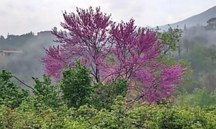 Spring in the Sabina
