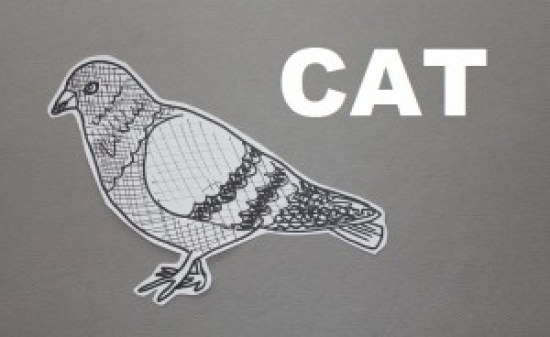 theuglyvolvo pigeon cat