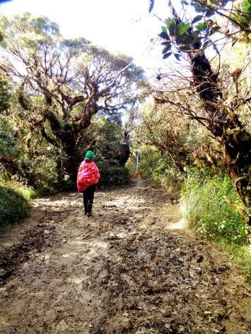 The muddy & slippery trail.