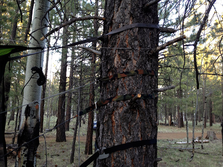 4-tree-straps
