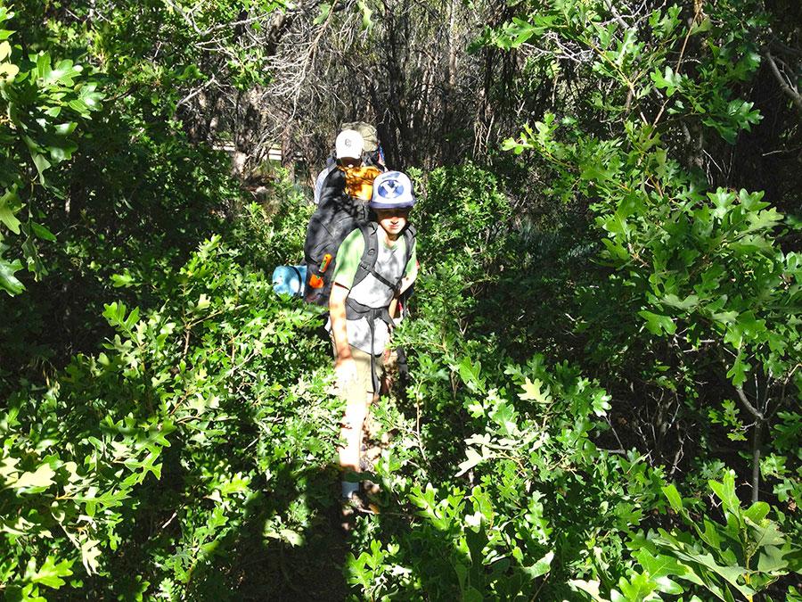 oak-grove-overgrown-trail