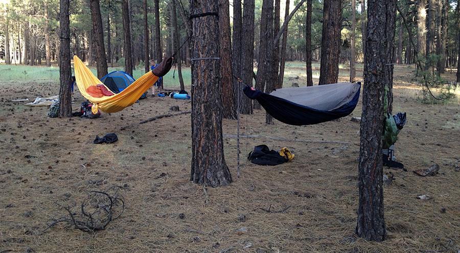 sycamore-hammocks