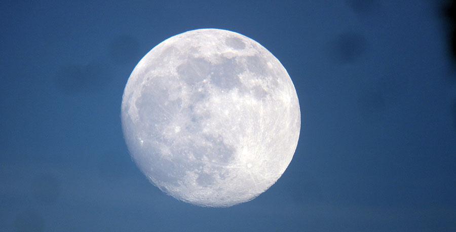sycamore-moon