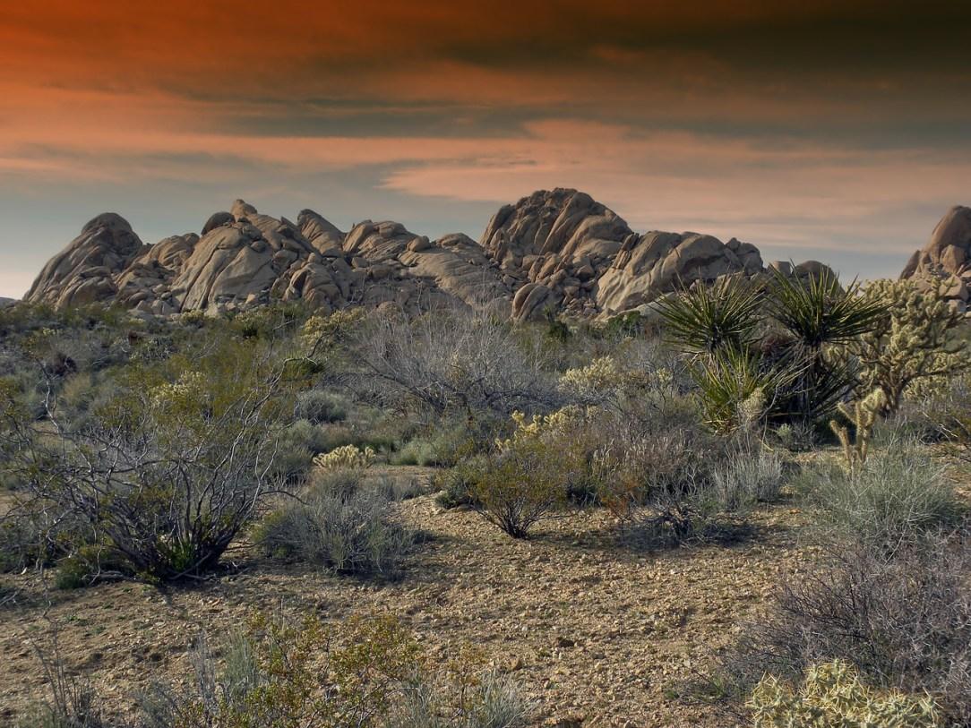 Desert National Wildlife Refuge threatened: Is military testing worth it?