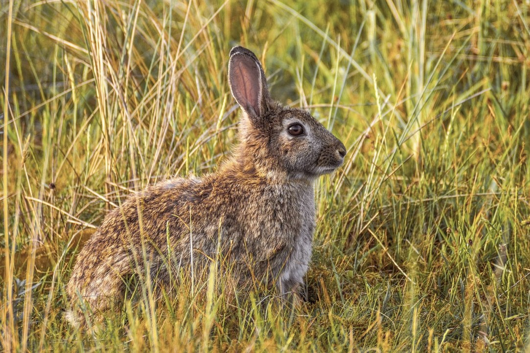 Rabbit hunting: Reconnect with the simple things
