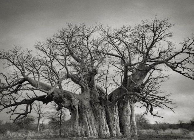 oldest-trees-beth-moon-6