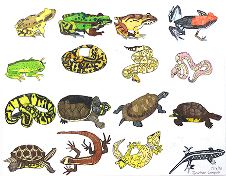 Jonathan-Campos-Amphibians-color-pencil-on-paper-2016.jpg