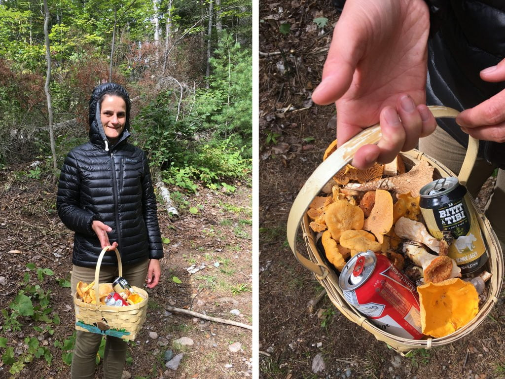 mushroom harvesting