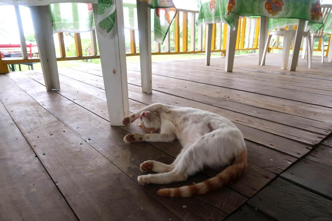 relaxed sleeping cat in el valle