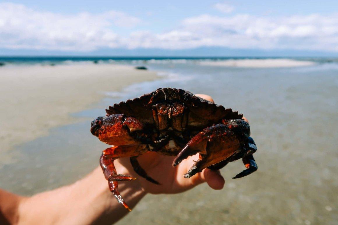 red crab up close