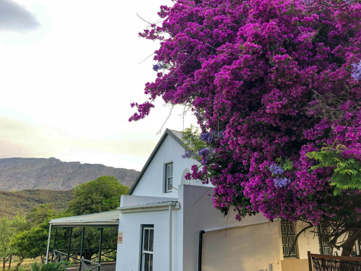 Flowering tree, traditional farmhouse, and hills in Barrydale