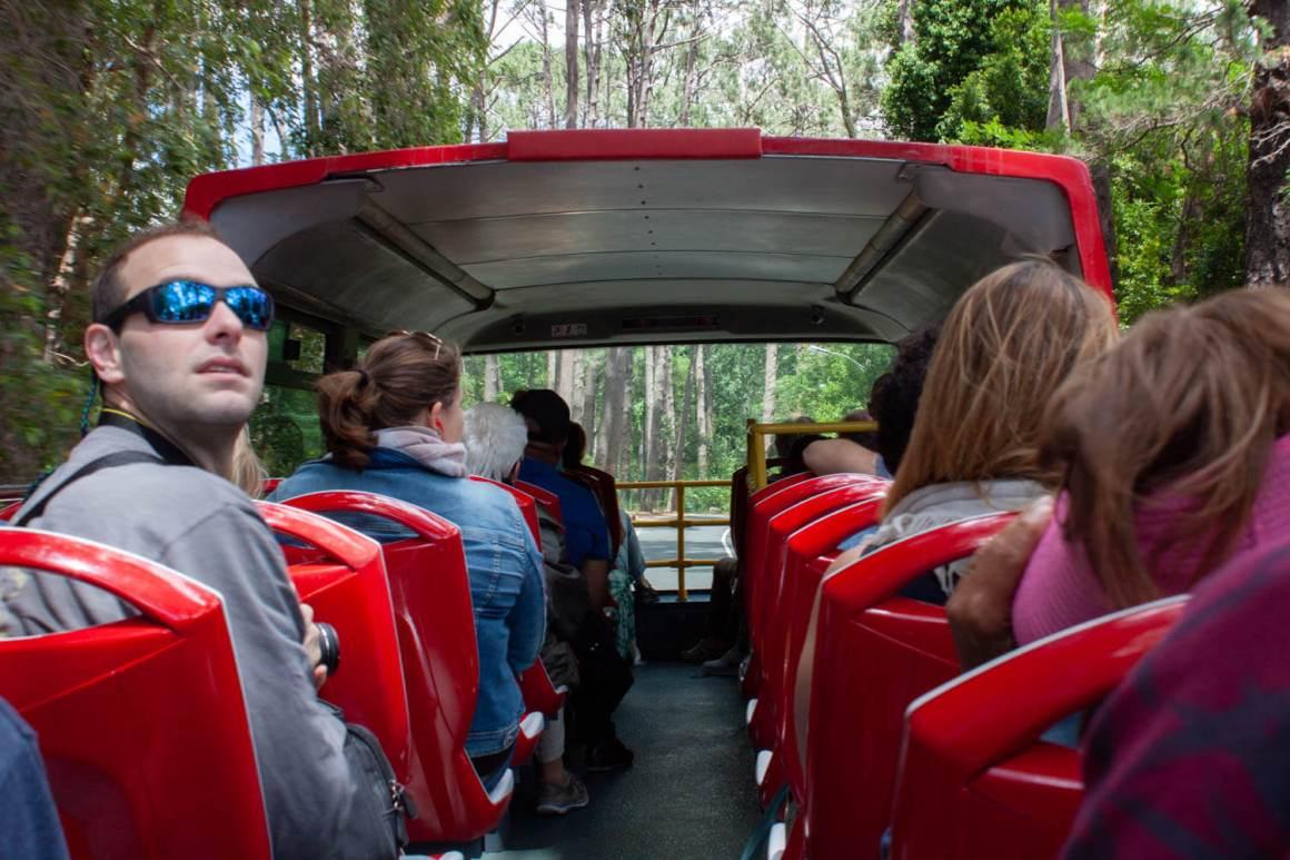 Going through the woods en route to Constantia Nek