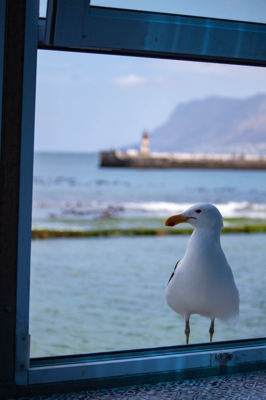 Seagull in Fish Hoek