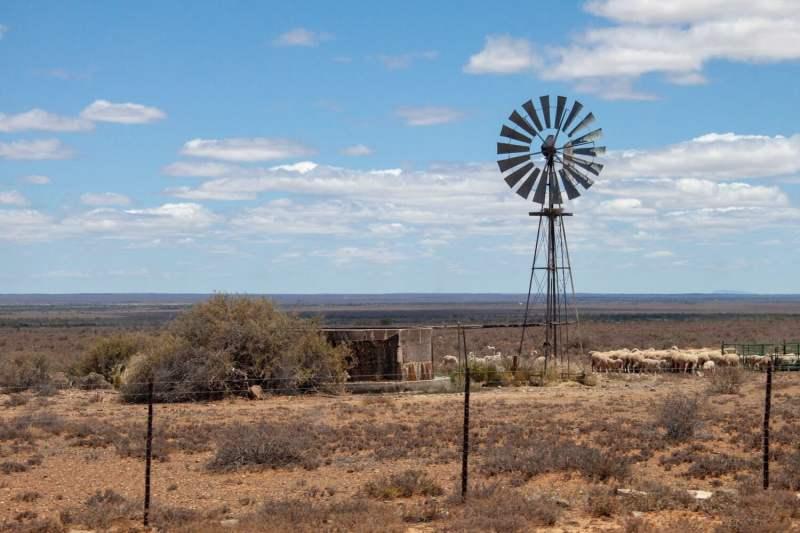 Windmill and sheep along road on Karoo road trip