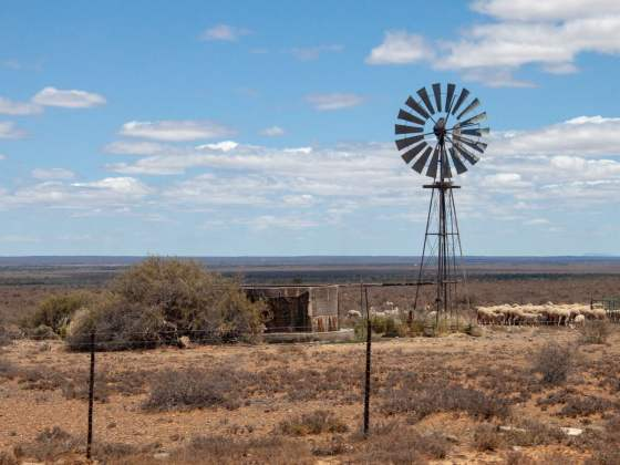 Windmill and sheep along road on Karoo road trip