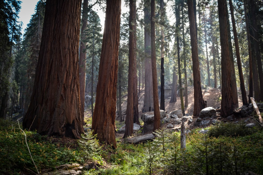 how to visit sequoia national park