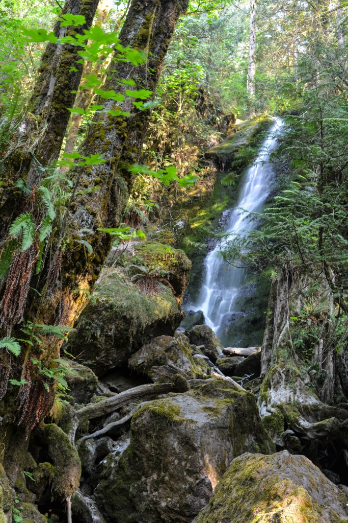 What to see in Olympic National Park