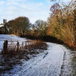 snow on path in countryside