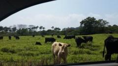 Happy Cows!!!