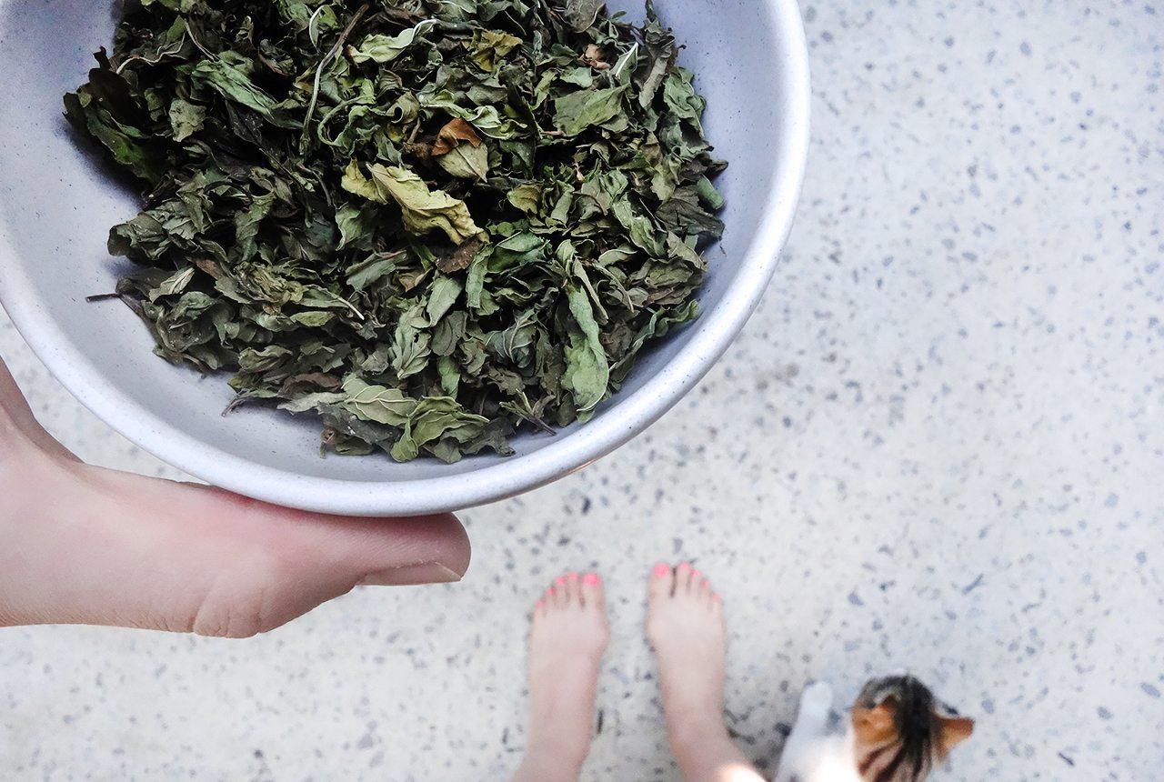da farq is spearmint what is spearmint tea health benefits of spearmint