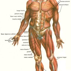 Foot Massage Therapy Diagram Viper 5901 Alarm Wiring Facts About And The Human Body