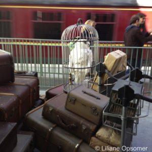 Hedwig on platform