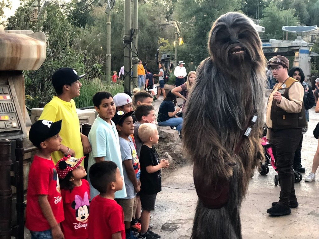 Chewbacca Star Wars characters in disney parks