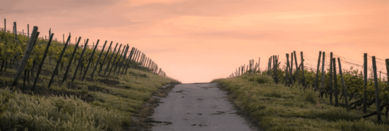 discipleship path