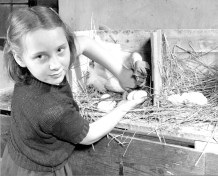 16-G-128-AAA-15090: Allegheny County, Pennsylvania. 11-41. Virginia Goldbach delivers in gathering eggs fresh.