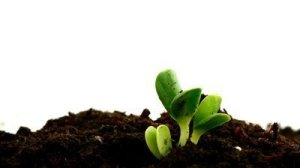 stock-footage-timelapse-of-emerging-seedlings