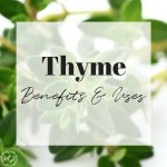 thyme benefits and uses for health home and homestead