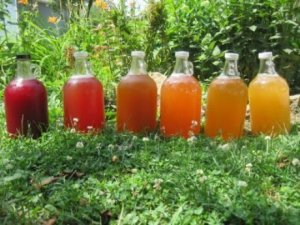 homemade-kombucha-field