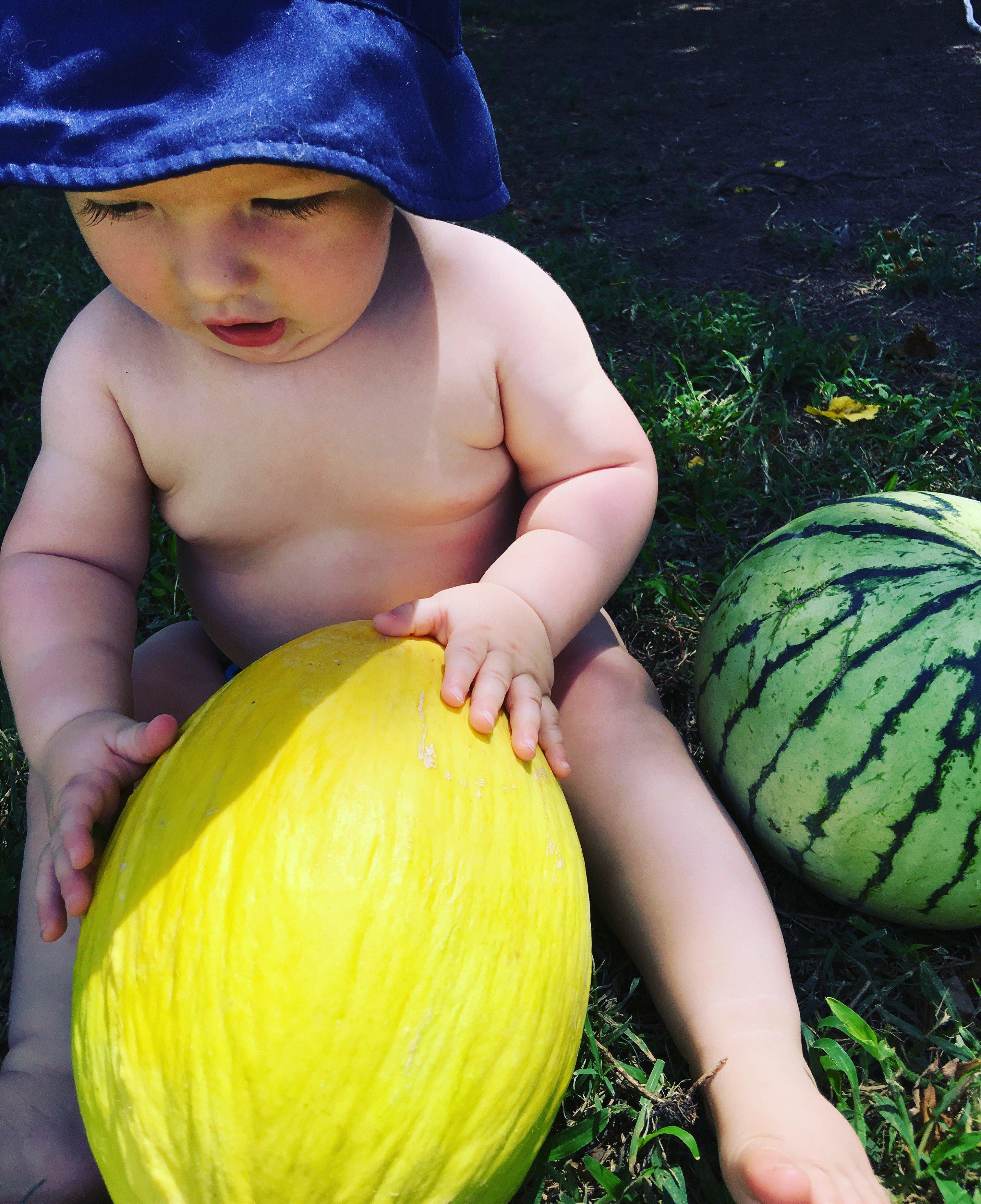 Harvesting garden melons