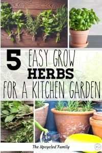 Wishing you could have more fresh herbs year-round? 5 of the easiest herbs to grow in your kitchen herb garden. How to make sure you always have fresh healthy herbs ready when you need them! #kitchenherbgarden #diy #ideas #best #tips #growing #herbstogrow #indoors #best #forcooking #easy