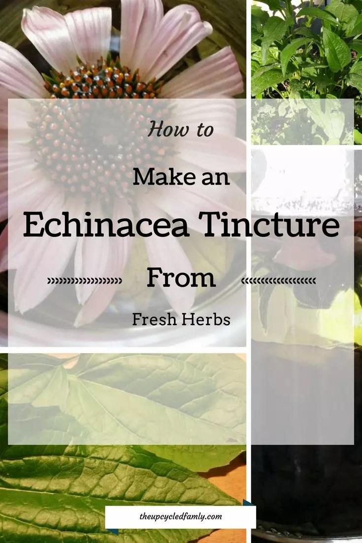 Echinacea tinctures