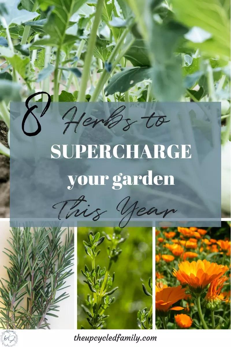 herbs for a productive garden