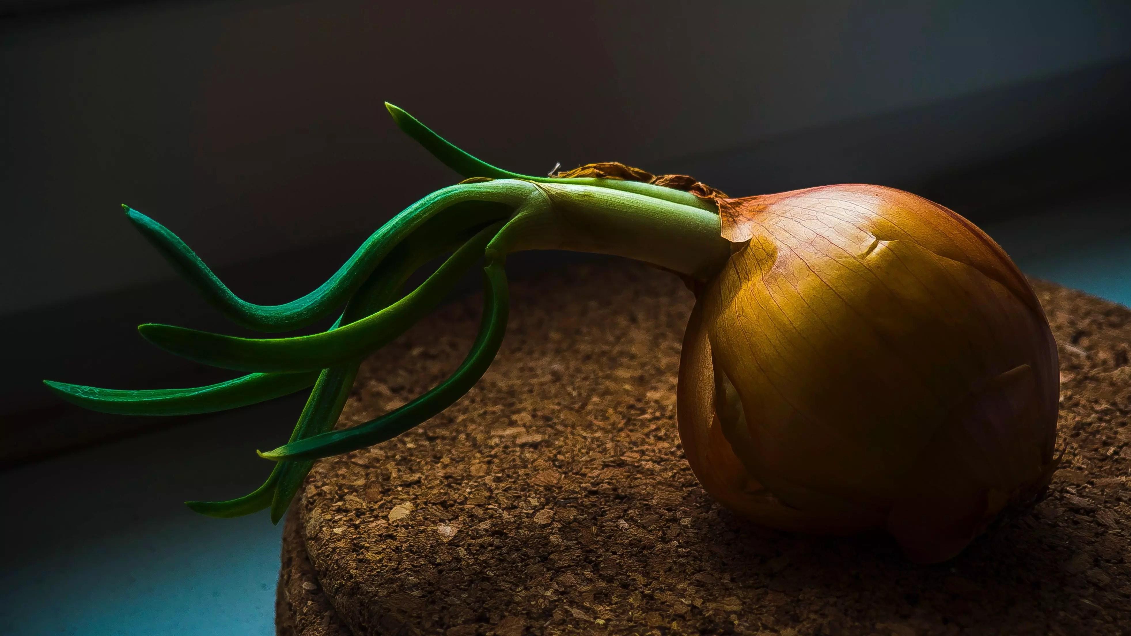 onion bulb